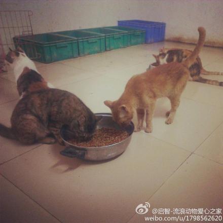 技客区_组队去流浪动物救助站帮忙打扫卫生喂饭